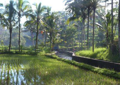 Bangli area.Bali