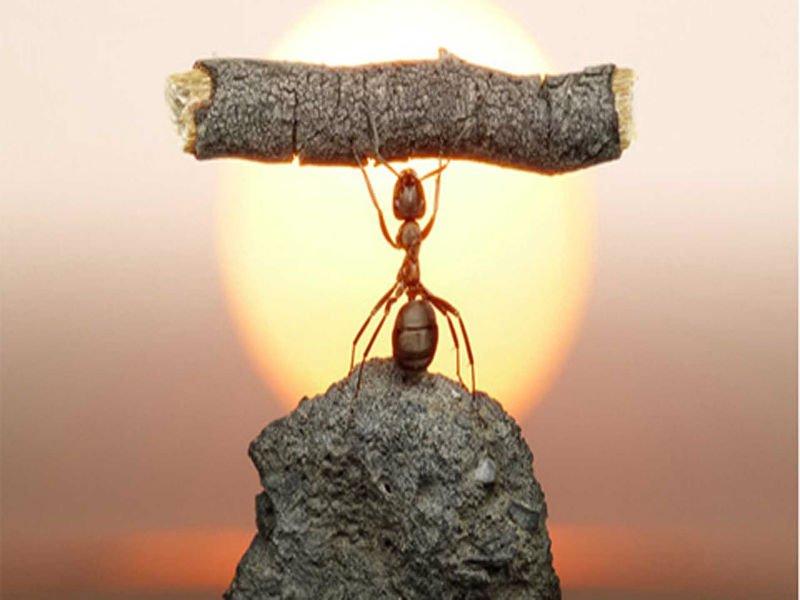 Como Gestionar con Éxito las Dificultades